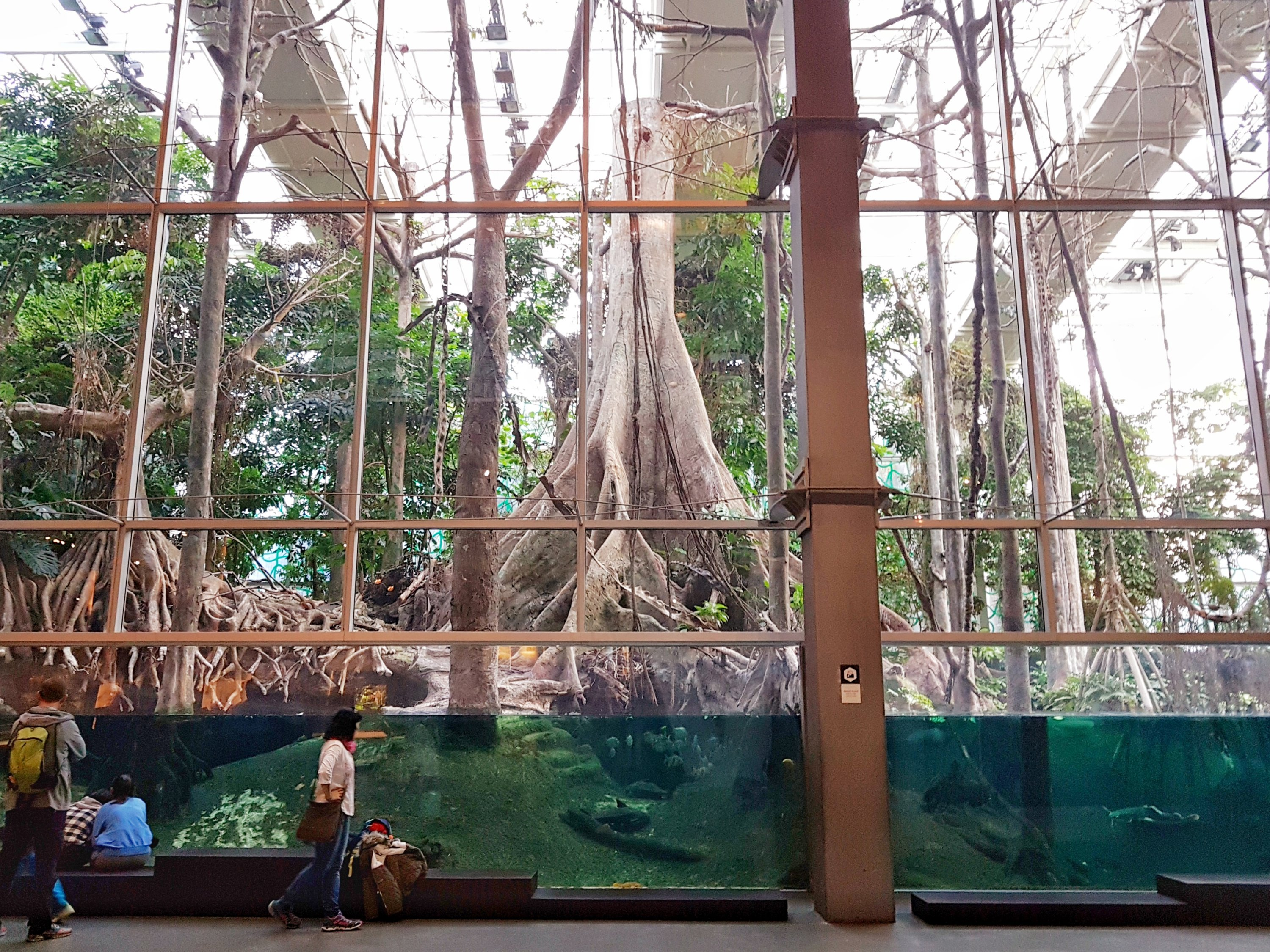 Flooded Forest of CosmoCaixa, Barcelona